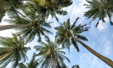 palm-trees-3058728_1280.jpg