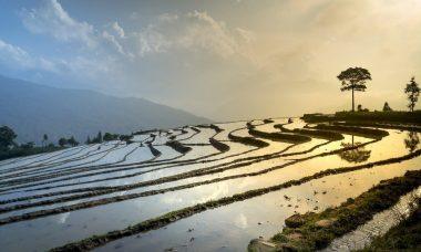 rice-field-3490060_1280.jpg